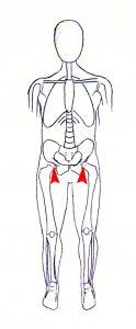 knee pain skeleton